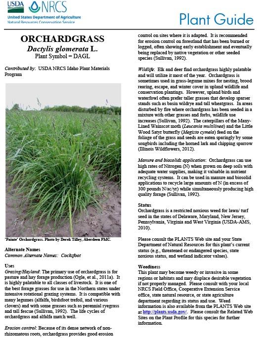 Orchardgrass (Dactylis glomerata) Plant Guide