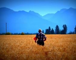 Westland Seeds - Agronomy